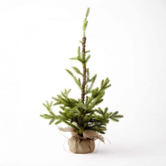 Alpine Tree – 40cm X 40cm X 70cm