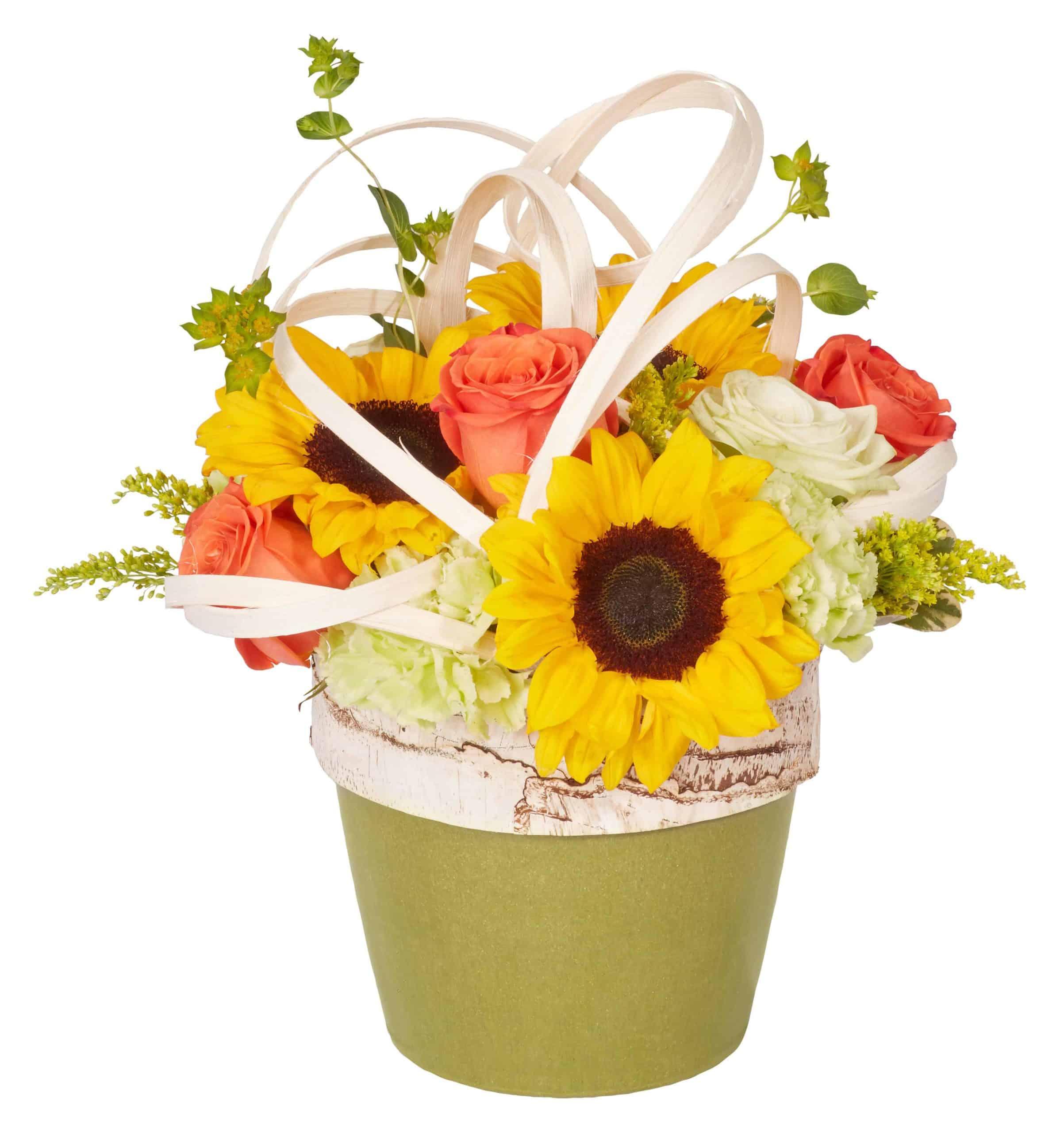 Sunflowers & Flat Wire